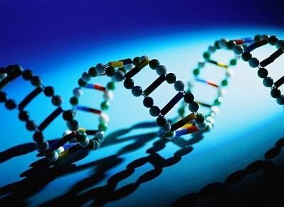 Model of a DNA spiral