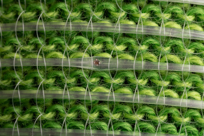 A close-up photograph of the digital fibres on green fabric. Credits: Image: Anna Gitelson-Kahn. Photo by Roni Cnaani.